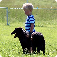 Adopt A Pet :: Alpha - Oliver Springs, TN