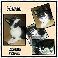 Adopt A Pet :: Mema - Richmond, CA
