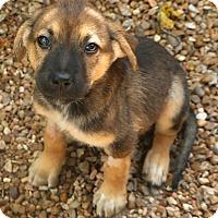 Adopt A Pet :: Carmel - Woonsocket, RI