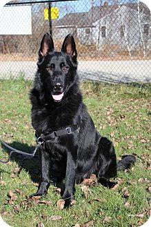 German Shepherd Dog Mix Dog for adoption in Paris, Maine - Ryder