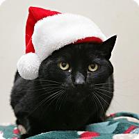 Adopt A Pet :: Odie - Bellingham, WA