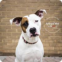Adopt A Pet :: Jess - Mooresville, NC