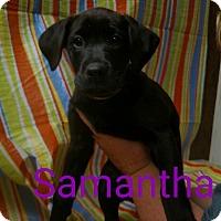 Adopt A Pet :: Samantha - Garden City, MI