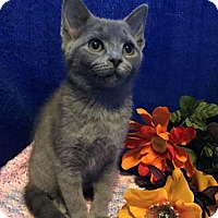 Adopt A Pet :: Alexis Female - knoxville, TN