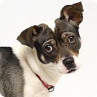 Adopt A Pet :: Misty - Westfield, NY
