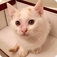 Adopt A Pet :: Crick - Gainesville, FL