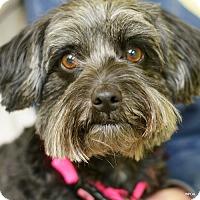 Adopt A Pet :: Annie - East Hartford, CT