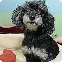 Adopt A Pet :: Francie - New York, NY