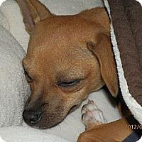 Adopt A Pet :: Mimi - Commerce City, CO