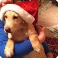 Adopt A Pet :: Buddy - Salem, NH