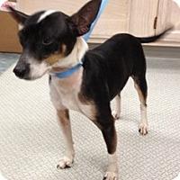 Adopt A Pet :: Jayda - Minnetonka, MN