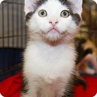 Adopt A Pet :: Reid - Irvine, CA