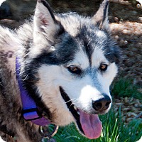 Adopt A Pet :: STELLA-Adoption Pending - Boise, ID