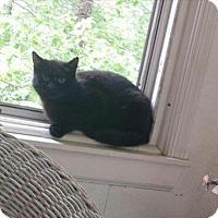 Adopt A Pet :: Molly URGENT BARN CAT FREE - Fredericksburg, VA