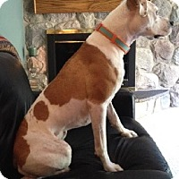 Adopt A Pet :: CHLOE - Birmingham, MI