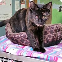Adopt A Pet :: Leela - Washingtonville, NY