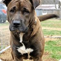 Adopt A Pet :: Waylon - Lancaster, OH
