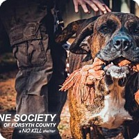 Adopt A Pet :: Roscoe - Cumming, GA