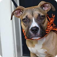 Adopt A Pet :: Daxton - Baton Rouge, LA
