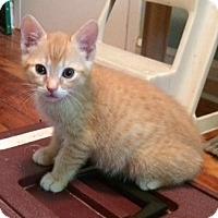 Adopt A Pet :: Juniper - Toronto, ON