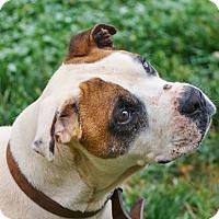 Adopt A Pet :: Al - Lincolnton, NC