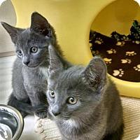 Adopt A Pet :: Walter - Warren, OH