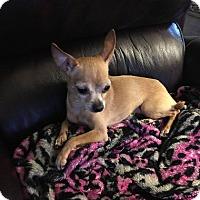 Adopt A Pet :: Samantha - Avon, NY