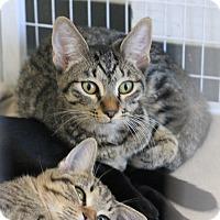 Adopt A Pet :: Innocent - Covington, LA
