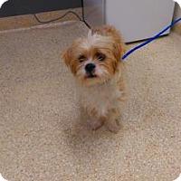Adopt A Pet :: Duchess - Carson City, NV