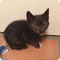 Adopt A Pet :: Scooby - Tucson, AZ