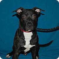 Adopt A Pet :: Snowglobe - Bradenton, FL