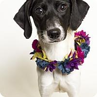Adopt A Pet :: Cora - Baton Rouge, LA