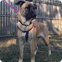 Adopt A Pet :: Lady - New Oxford, PA