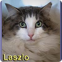 Adopt A Pet :: Laszlo - Aldie, VA