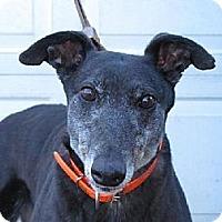 Adopt A Pet :: Mesa Angela - Mendota, IL