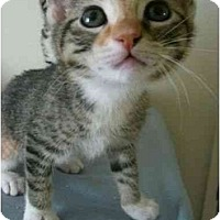 Adopt A Pet :: Melon - Davis, CA