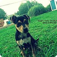 Adopt A Pet :: Zeus - Gadsden, AL