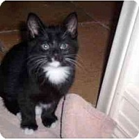 Adopt A Pet :: Boma - Irvine, CA