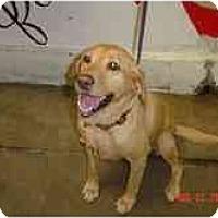 Adopt A Pet :: Avery - Cumming, GA