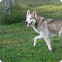 Adopt A Pet :: Denali - Augusta County, VA