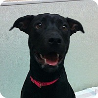 Adopt A Pet :: Sammy - Gilbert, AZ