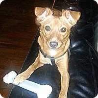 Adopt A Pet :: Paco ~ Adoption Pending - Youngstown, OH