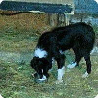 Adopt A Pet :: Luma - Northumberland, ON