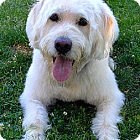 Adopt A Pet :: GANDALF~ADOPTED! - North Vancouver, BC