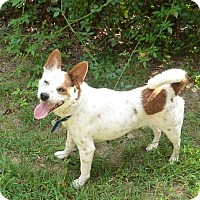 Adopt A Pet :: Estelle - Carlisle, TN
