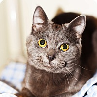 Adopt A Pet :: Andy - Xenia, OH