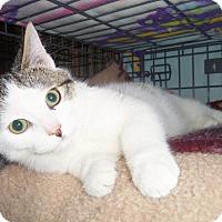 Adopt A Pet :: MAX - Medford, WI