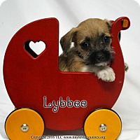 Adopt A Pet :: Lybbee - Simi Valley, CA