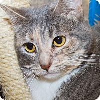 Adopt A Pet :: Bree - Irvine, CA