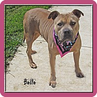 Staffordshire Bull Terrier Mix Dog for adoption in Hillsboro, Texas - Belle